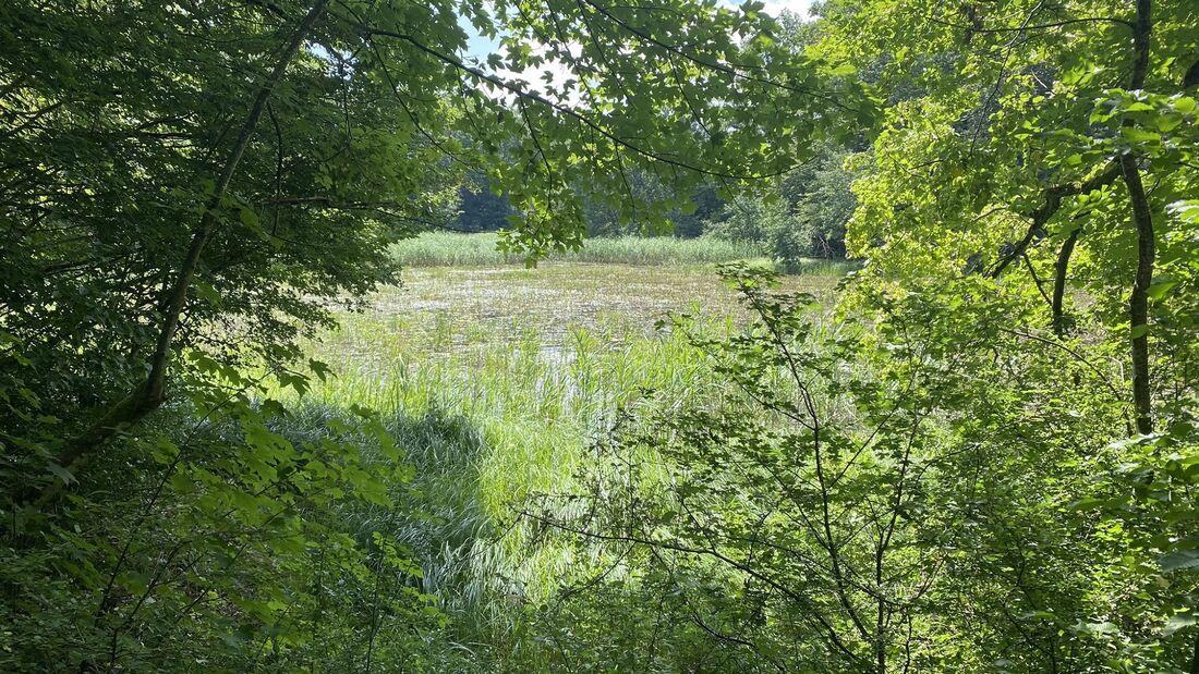 ... und durch Wälder mit kleinen Seen.