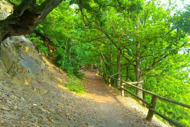 Anspruchsvolle Single Trails bei der Run & Boat Urwaldchallenge