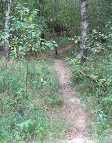 Bärenfels-Trail