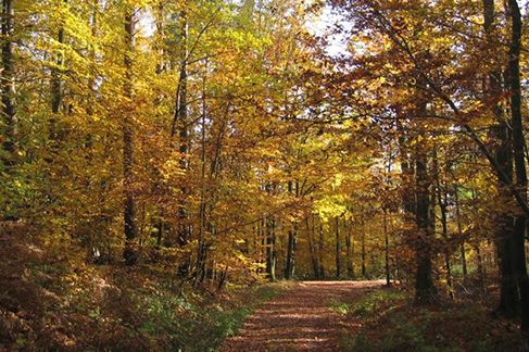 Deisterberglauf Barsinghausen: Durch den Wald in den Deister