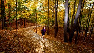 Ein Lauf im Herbst ist meist auch ein optisches Erlebnis.
