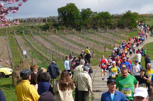 Marathon Deutsche Weinstraße: In den Weinbergen