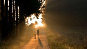Morgens joggen