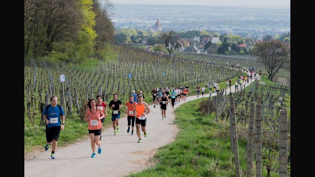 Perchtoldsdorfer Weinberglauf: Durch die Weinberge rund um Perchtoldsdorf