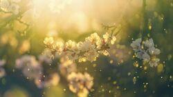 Pollenallergie und Heuschnupfen