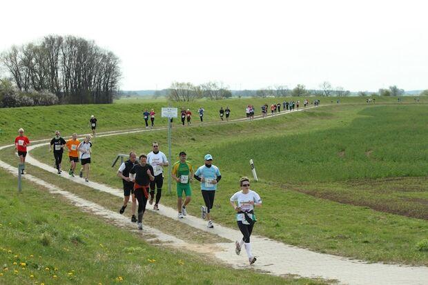 Tangermünder Elbdeichmarathon 2013 1