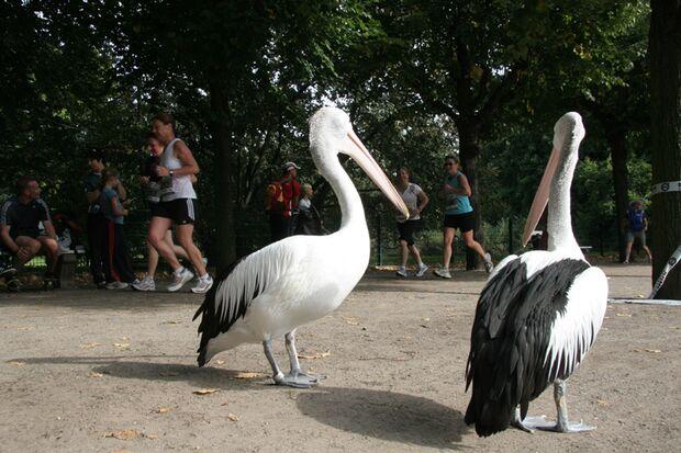 Tierparklauf Berlin 2012