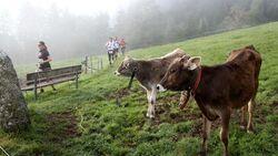 Tour de Tirol 2014 Pölven Trail